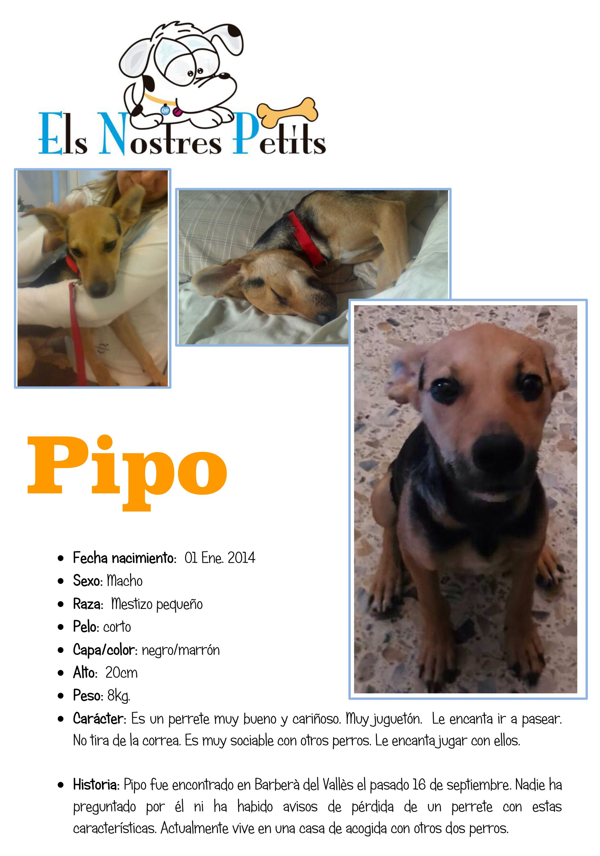Pipo 24-09-14-1