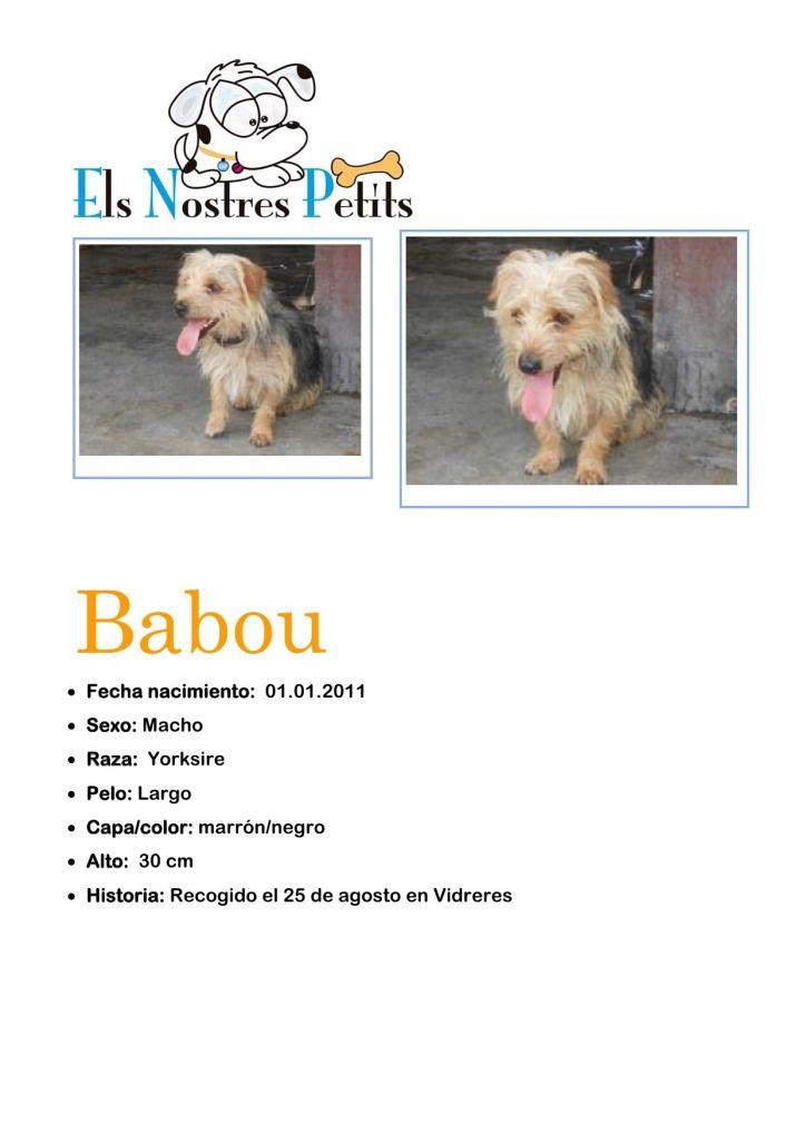 Ficha Babou