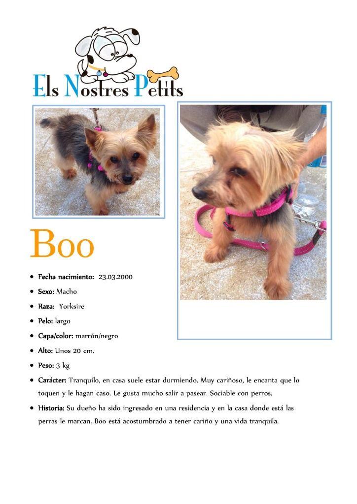 Ficha Boob07-10-14
