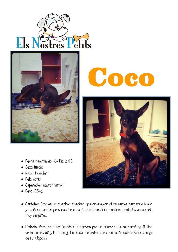 Ficha  Coco 21-10-14
