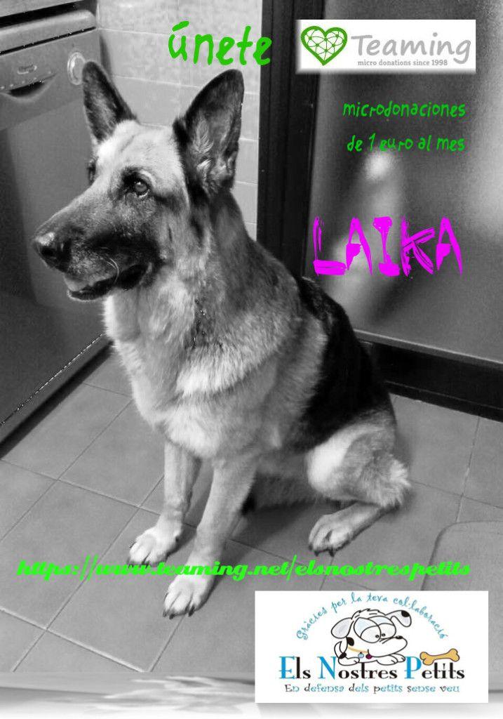 Laika-phixr