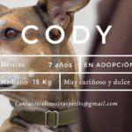 udoog-cody-en-adopcion
