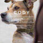 udoog-cody-en-adopcion-instagram