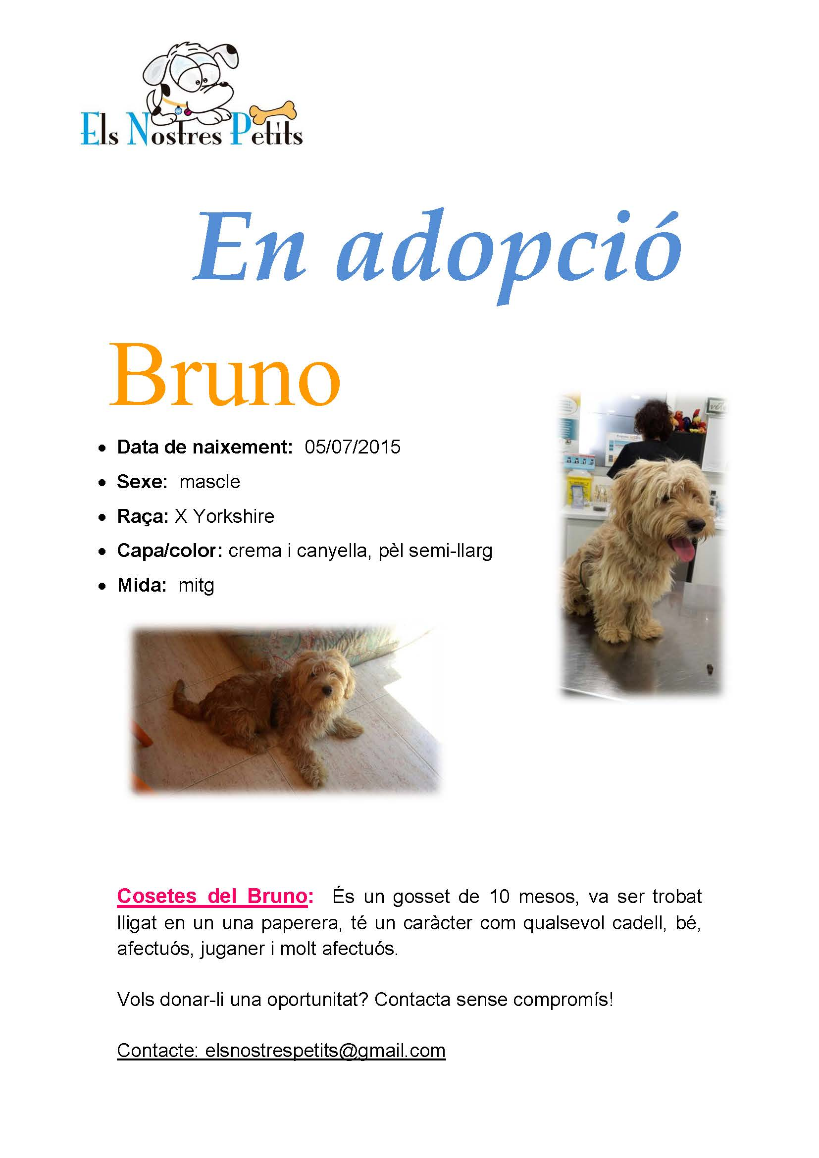 Fitxa Bruno