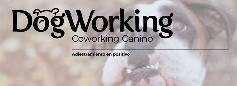 DogWorking