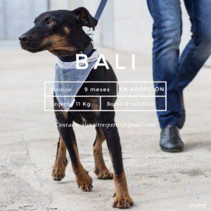 udoog-bali-en-adopcion-instagram