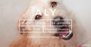 udoog-aly-en-adopcion
