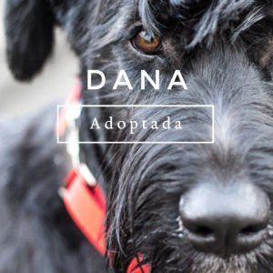 udoog-dana-adoptada-instagram