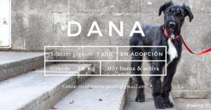 udoog-dana-en-adopcion
