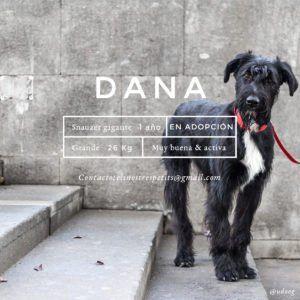 udoog-dana-en-adopcion-instagram